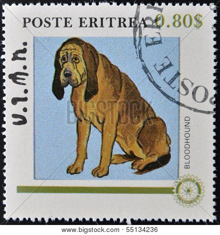 A stamp printed in Eritrea shows a dog bloodhound