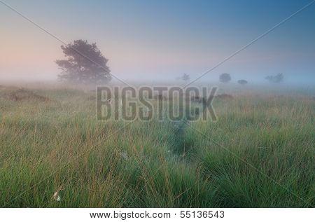 Calm Misty Summer Sunrise