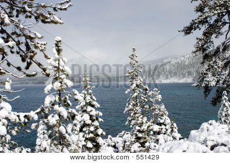 Snow Laden Trees At Lake