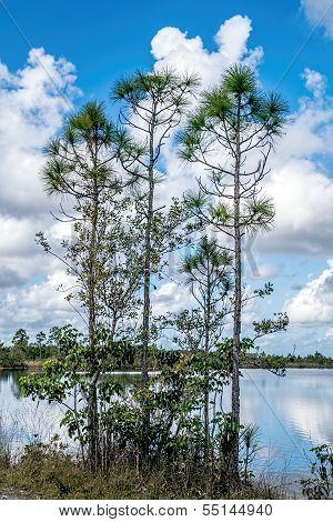 Everglades Lakes