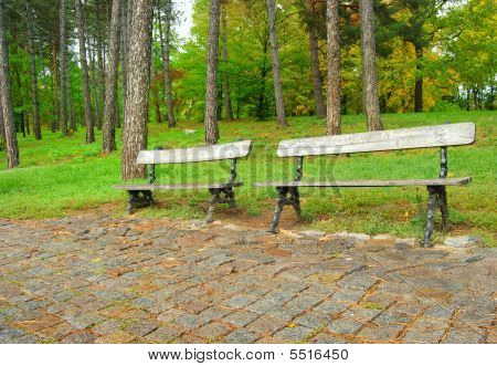 Two Free Benches In Rainy Autumn Park