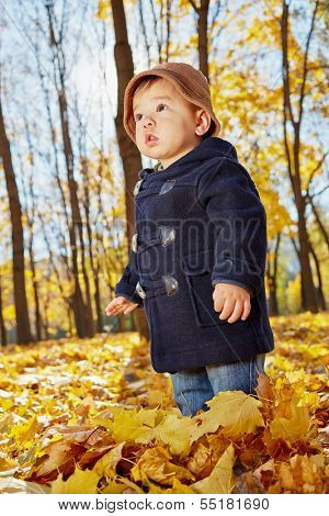 Little boy stands in yellow fallen leaves in autumn park, low angle view