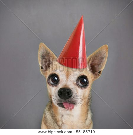 a dog in front of a blank chalkboard with a birthday hat on