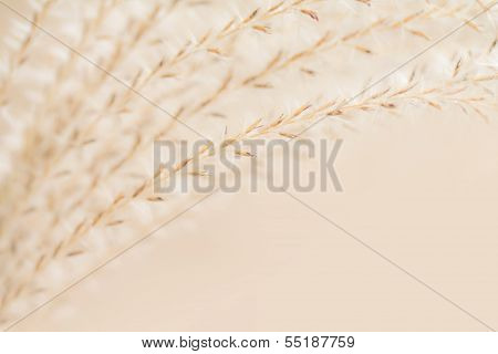 Decorative Grass Background