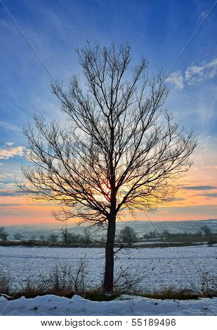 Tree in snow against sunset