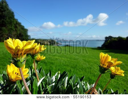 Yellow Flowers In Front Of Grassland And The Sea