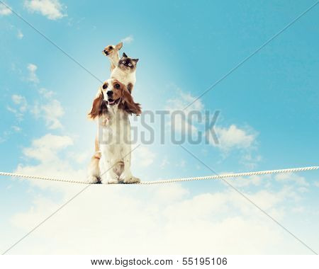 Image of spaniel dog balancing on rope