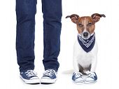 picture of begging dog  - dog owner with dog both wearing sneakers - JPG