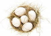 image of bast  - White eggs - JPG