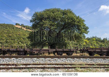 Train Railway On Nature