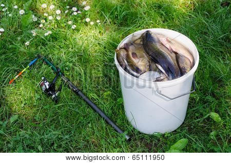 Big White Bucket Many Fish And Rod Lying In Grass