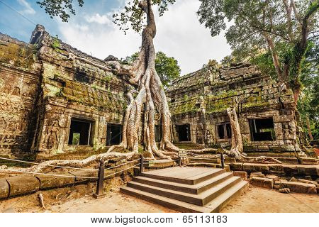 Classical picture of Ta Prohm Temple, Angkor, Cambodia