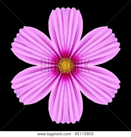 Pink Purple Mandala Flower Kaleidoscope Isolated On Black