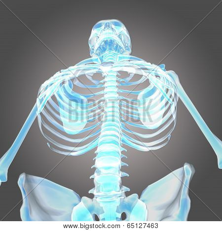 low angle view of human skeleton