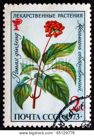 Postage Stamp Russia 1973 Ginseng, Medicinal Plant
