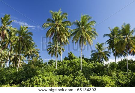 Coconut trees, Sematan Beach