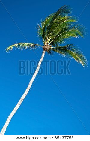 Palm Tree With A Beautiful Azure Blue Sky In Background