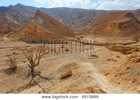 Desert landscape with dry acacia trees