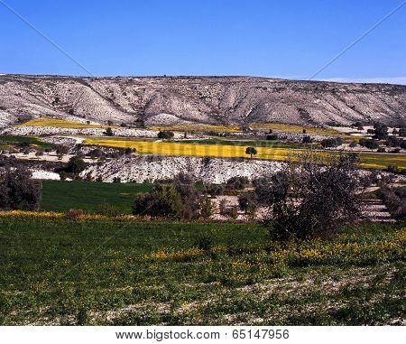 Spring landscape, Cyprus.