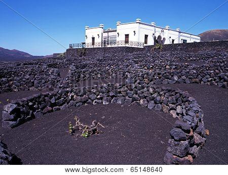 Bodega and vineyard, Lanzarote.