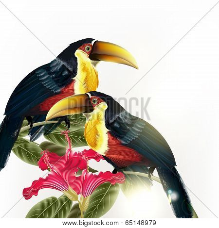 Background With Vector Colorful Tropical Birds And Flowers