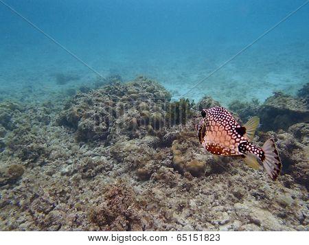 caribbean snorkeling
