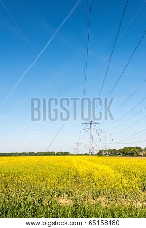 Yellow Flowering Rapeseed Plants In Springtime