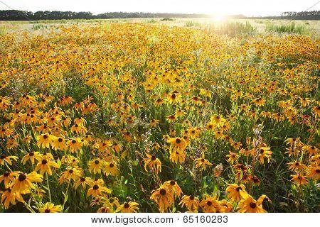 Beautiful summer landscape of flowering meadows