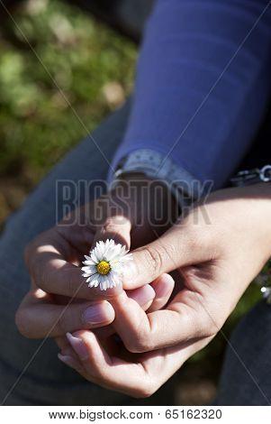 I'll Give You My Daisy