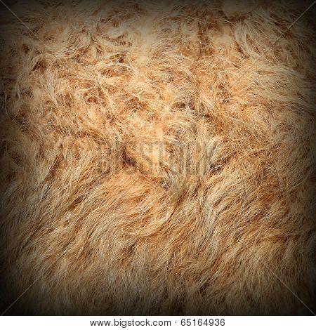 Llama Detail Of Fur