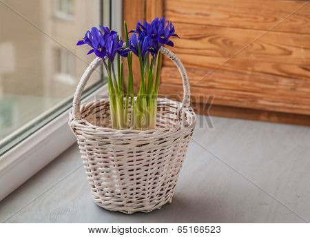 Irises In A Basket  On The Window
