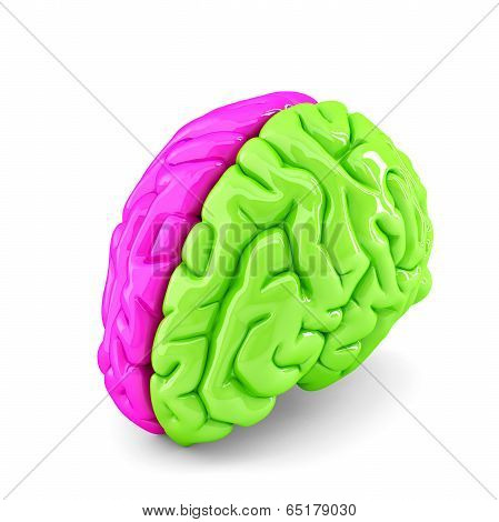 Creative Brain Concept. Isolated. Contains Clipping Path