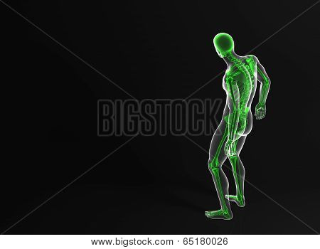 Skeleton Of The Man. Rear View. Contains Clipping Path