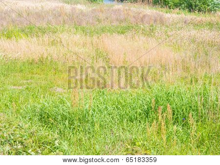 Meadow Grass And Hay Be Mixed