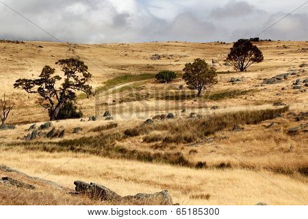 Australian Open Countrylandscape