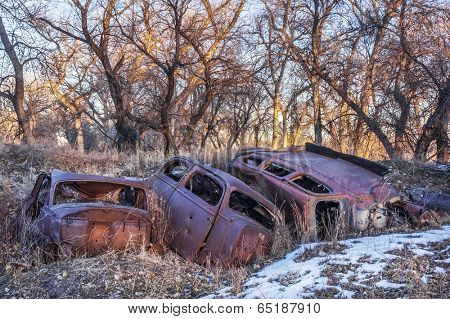 rusty junk cars abandoned in woods - environmental pollution concept