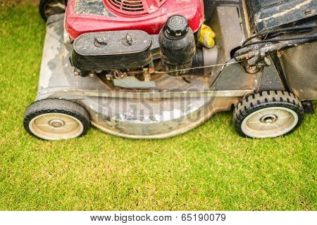 Cutting Green Grass In Yard With Lawnmower.