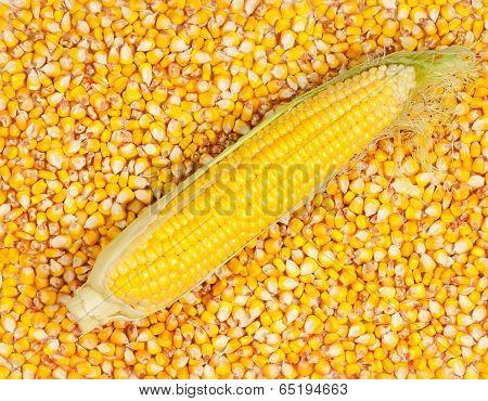 Corn Grains