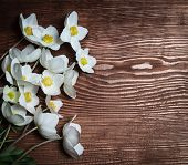pic of windflowers  - Spring flowers on wooden background  - JPG