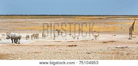 Panorama of animals in Etosha