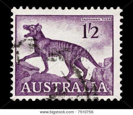 Tasmanian Tiger