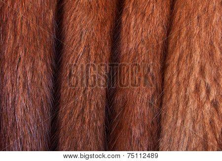 Folded Muskrat Fur