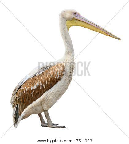 Pelican cutout