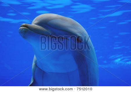 A Dolphin Looks At You