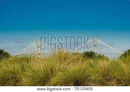 Suspension Bridge Behind Sea Grasses