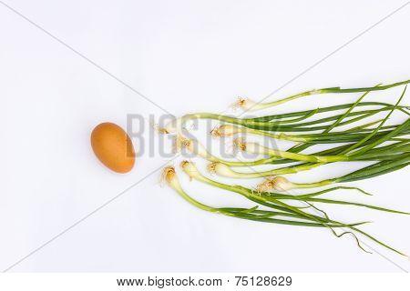 Scallions And Egg Isolated On White Background, Concept Fertilisation
