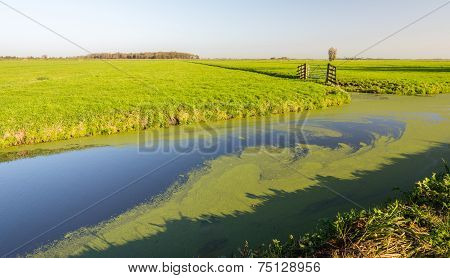 Wide Ditch Covered With Floating Common Duckweed