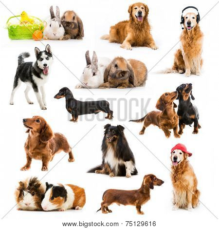 set of pets isolated on white background