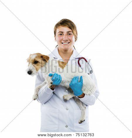 Female veterinarian examining dog isolated