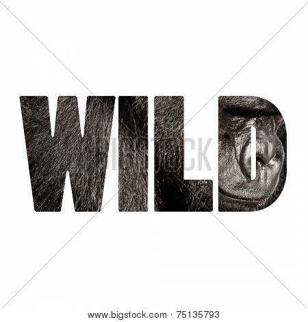 Word Wild Face Portrait Of A Gorilla Male